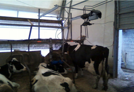 Monitoring system viewed at an angle from the cow with the Kinect™ Camera recording above the cow.